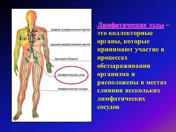 Что такое лимфатические узлы