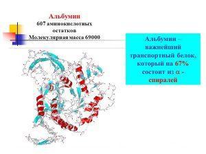 Альбумин - белок
