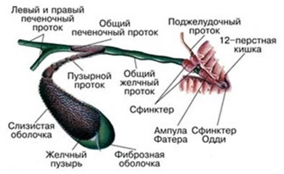 Дисфункция сфинктера Одди