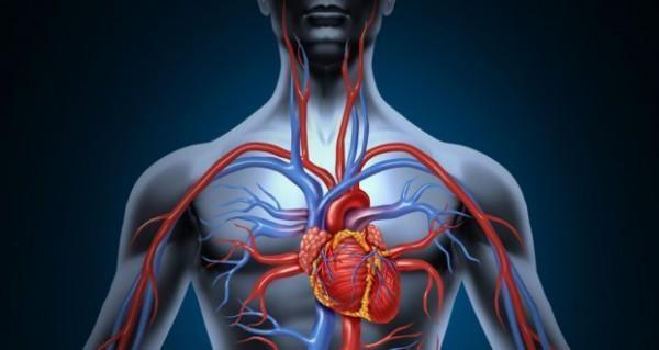 Из-за недостаточного притока крови к мышечным тканям могут возникнуть проблемы с работой сердечно-сосудистой системы