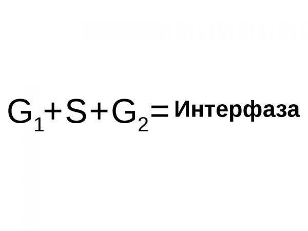 Интерфаза - основные составляющие (формула)