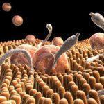 Лекарства для профилактики глистов у взрослых