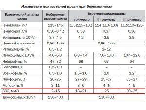 Нормы показателей крови женщины во время беременности по триместрам