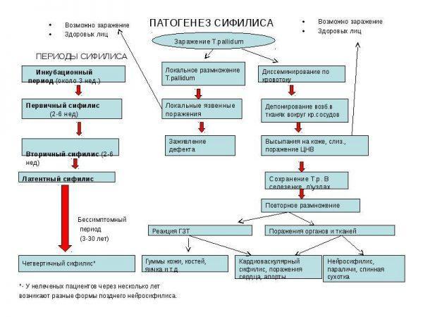 Патогенез сифилиса