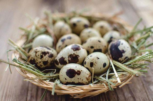 Перепелиные яйца - отличное средство для повышения потенции