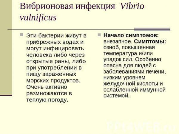 Вибрионовая инфекция Vibrio Vulnificus