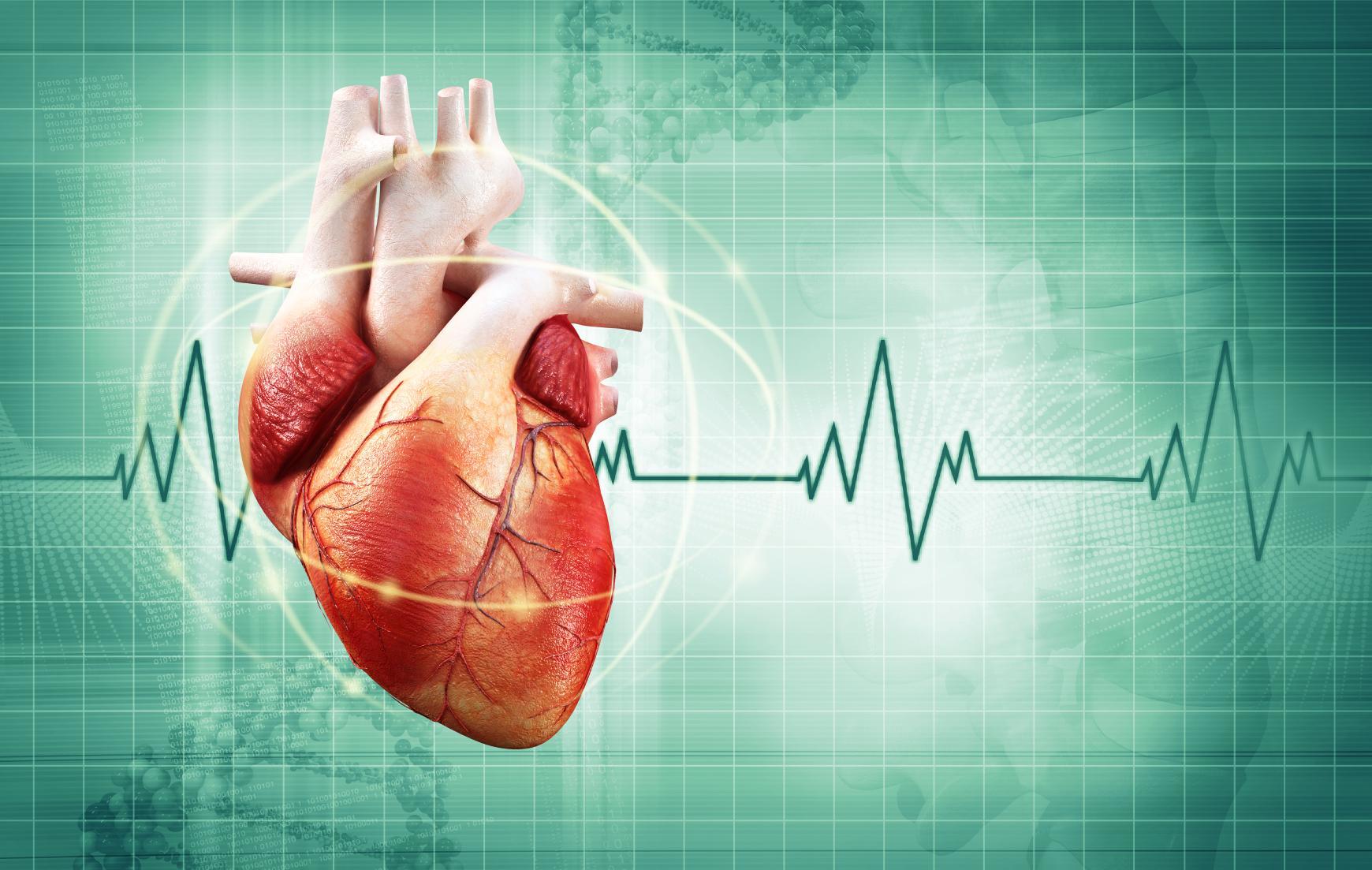 Уменьшение частоты сердечных сокращений называется