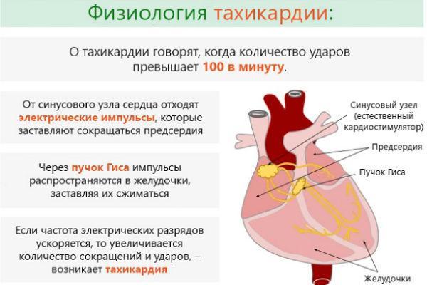 Тахикардия: лечение народными средствами, рецепты и советы