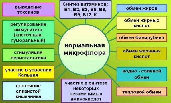 Функции нормальной микрофлоры в кишечнике человека