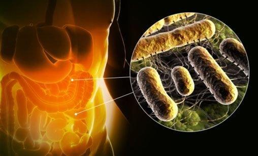 То, какие кишечные газы возникнут, зависит от состава микрофлоры кишечника