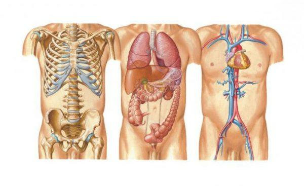 Возбудители могут размножаться и жить в любой системе органов и тканей, вызывая множество нарушение от обычного прыща до серьезного воспаления в почках