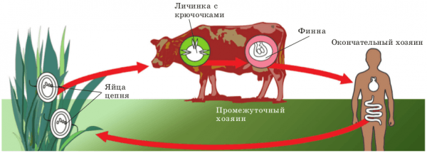 В организм животных паразиты попадают из природной среды