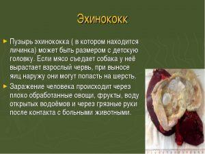 Общая информация по паразиту и вид личинок после вскрытия капсулы