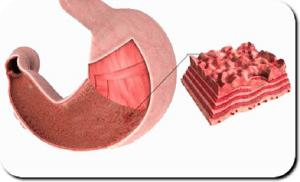При эрозии желудка происходит деформация только верхних слоев органа