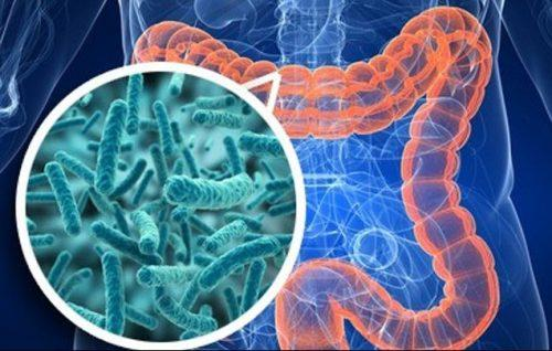 Симптомы амебиаза кишечника