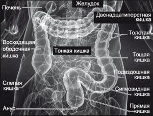Что показывает МРТ кишечника