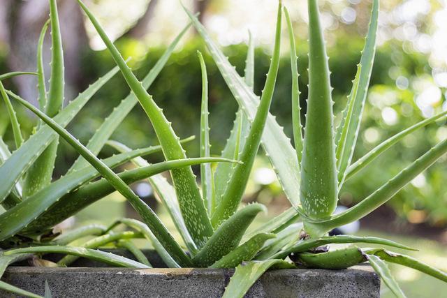 Травы при гастрите с повышенной и пониженной кислотностью, какие можно пить