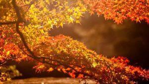 Обострение катаральной формы бульбита отмечается весной и осенью