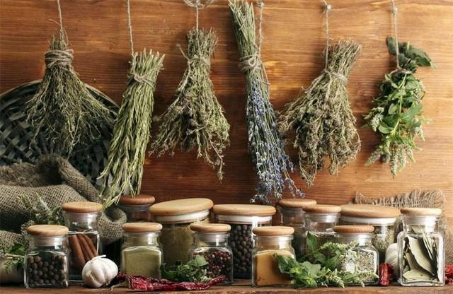 Травы – верный помощник в лечении заболеваний органов пищеварения
