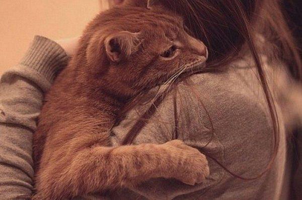 Боль в горле может быть проявлением аллергической реакции на шерсть домашнего животного