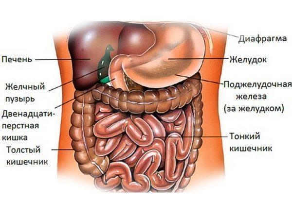 Поскольку желудок имеет полую форму и расположен между пищеводом и двенадцатиперстной кишкой, данный метод исследования наиболее удобен