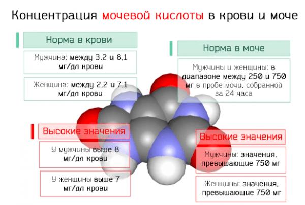 Концентрация мочевой кислоты в крови и моче – норма и высокие значения