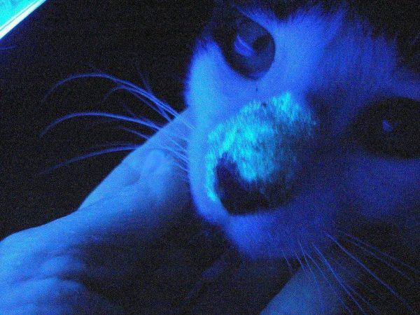 Выявление лишая при помощи ультрафиолета