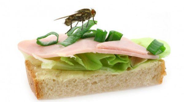 Следите, чтобы мухи не садились на еду