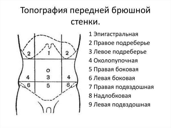 Топография передней брюшной стенки