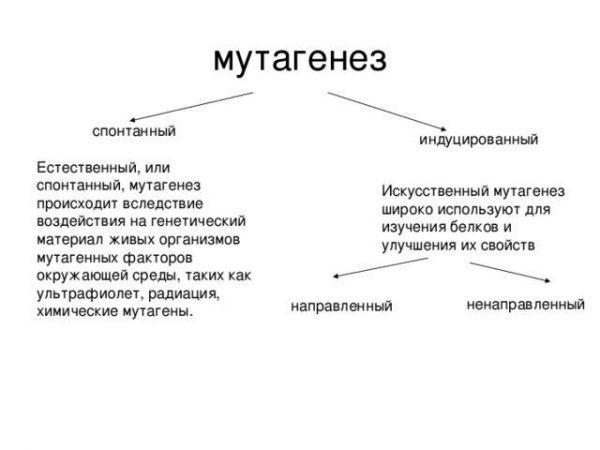 Мутагенез - описание