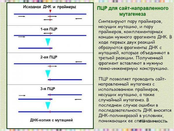 ПЦР для сайт-направленного мутагенеза