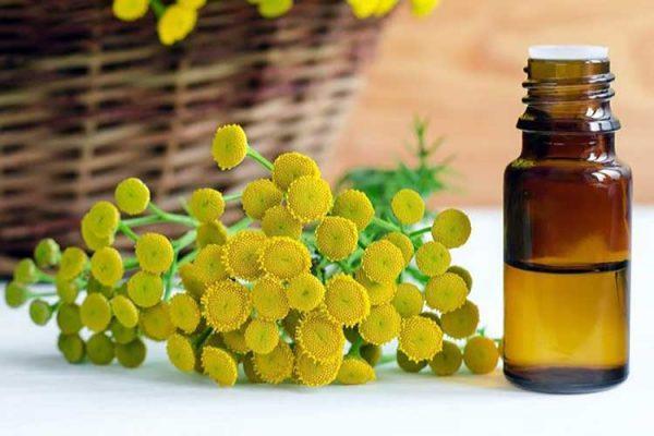 Пижма обыкновенная - эффективное лекарственное растение, обладающее желчегонным и глистогонным действием