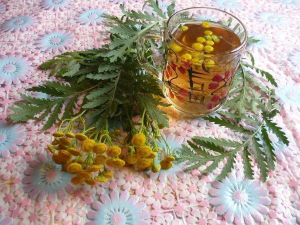 Пижму применяют для лечения заболеваний нервной системы, желудочных расстройств, болезней печени, нервном истощении