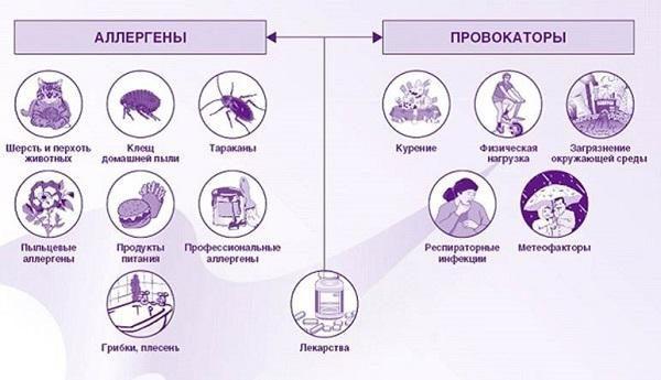 Возможные аллергены и провокаторы