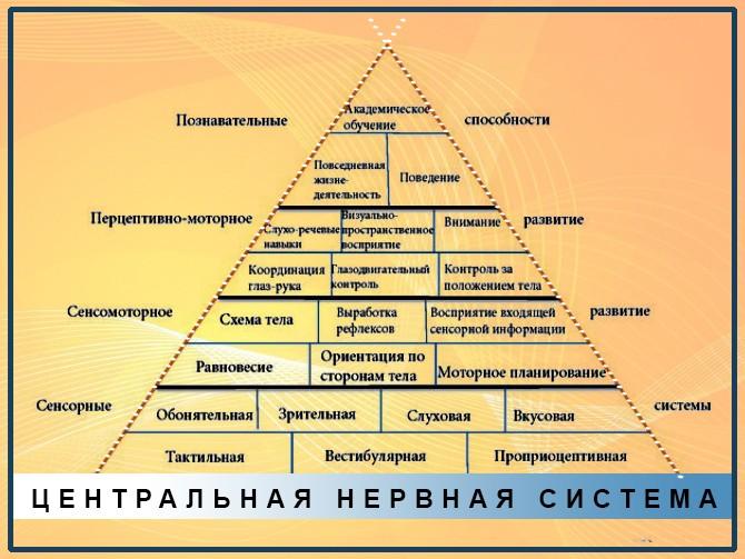 Пирамида развития ЦНС