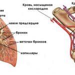 Отхаркивающие средства и муколитики