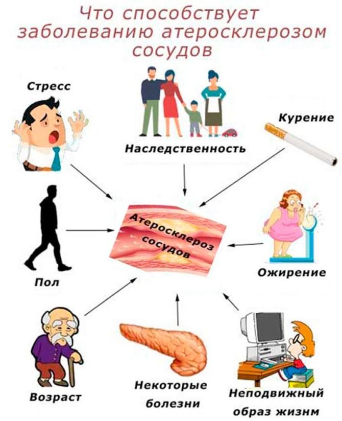 Причины развития атеросклероза сосудов