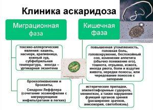 Клиника аскаридоза