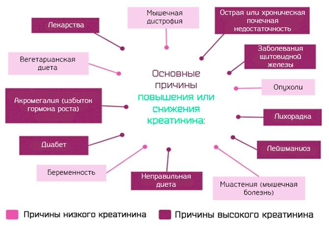 Причины повышения или снижения креатинина в крови