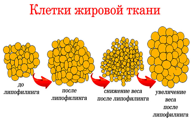Клетки жировой ткани