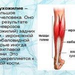 Растяжение ахиллова сухожилия: симптомы и лечение, отличия от разрыва