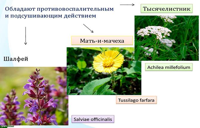 Травы при орхоэпидидимите