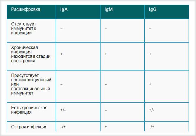 Возможные комбинации наличия или отсутствия антител при ИФА тесте
