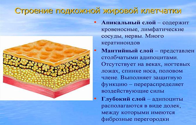 Подкожная жировая клетчатка
