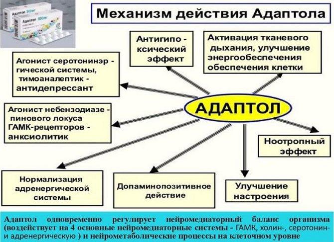 Механизм действия Адаптола